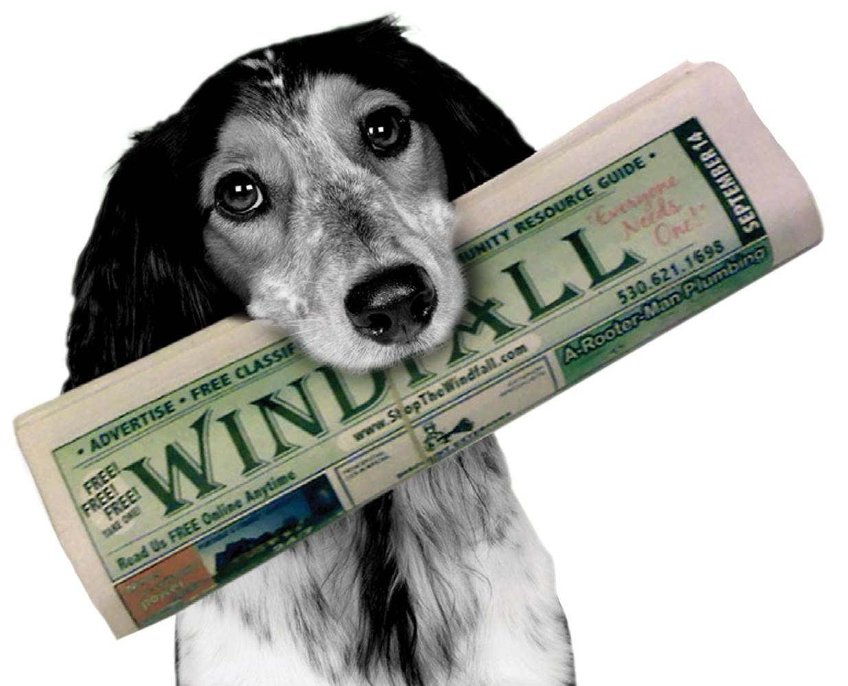 Windfall Doggie with paper